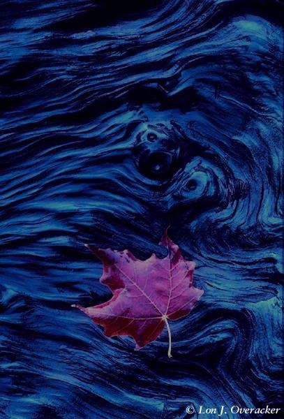 Floating Leaf (51k)