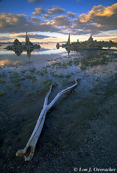 Shore of Mono Lake at Dusk (49k)